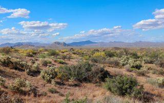 North Scottsdale Arizona Spring Landscape