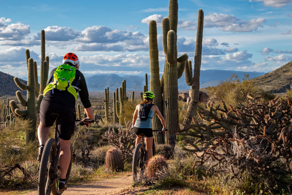Mountain Bikers On Desert Trail